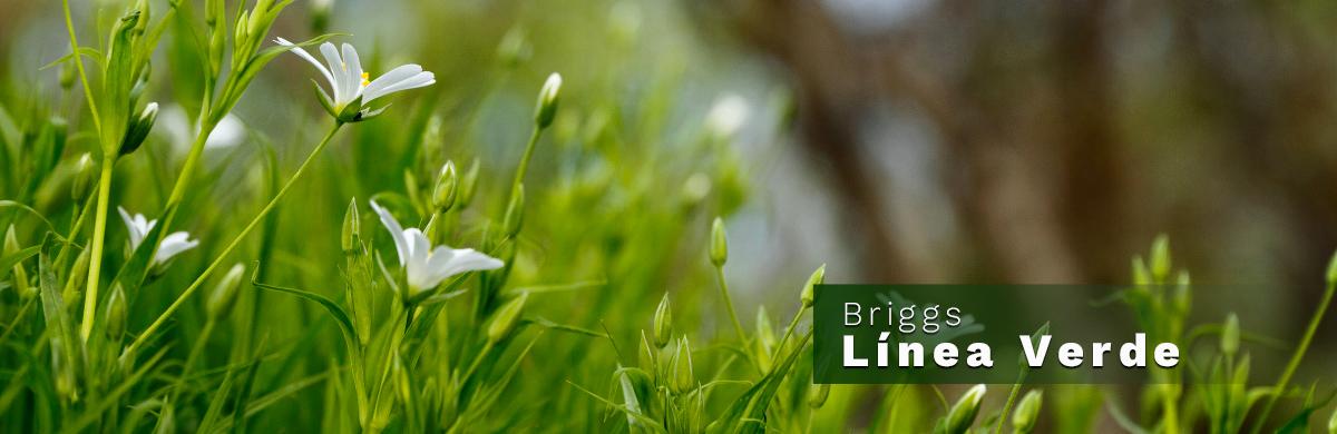 Conoce nuestra Línea Verde | Briggs USA - The Premium Bath Collection